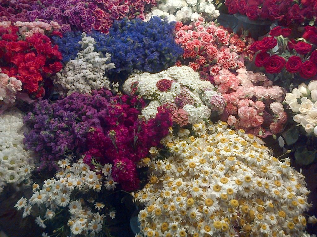 Fleurs Photo:  This Photo was uploaded by Camille_Valin. Find other Fleurs pictures and photos or upload your own with Photobucket free image and video h...