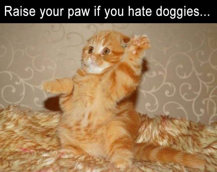 Funny Animal Pictures Of The Day 21 Pics Funny Animal Pictures Cats And Kittens Funny Animals