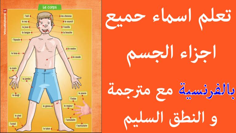 أسماء أجزاء الجسم بالفرنسية مترجمة بالعربية مع النطق