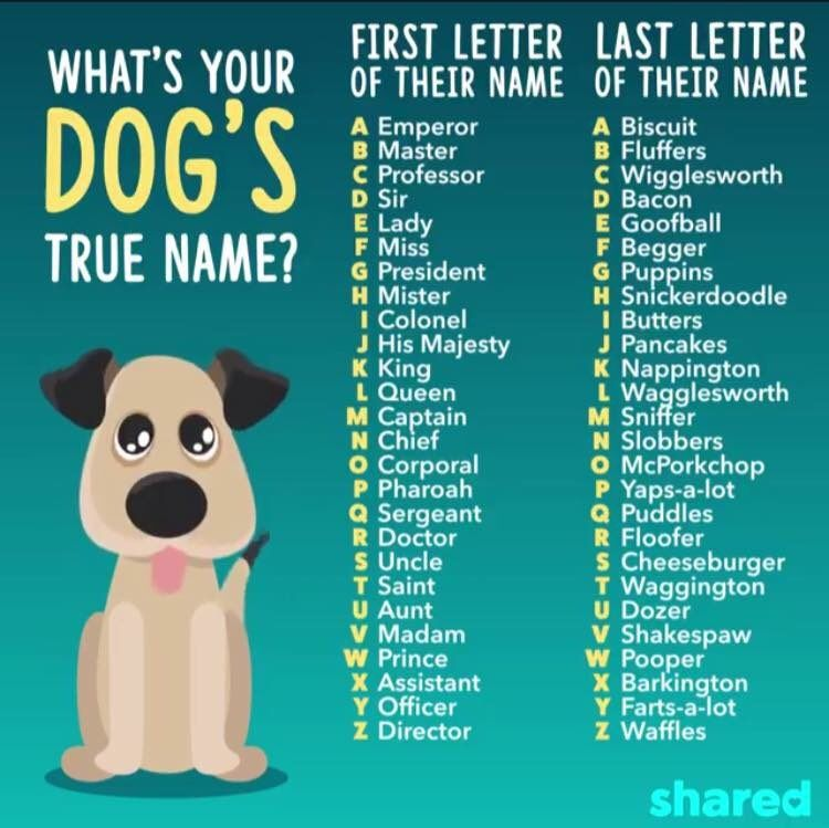 8 Twitter Girl Dog Names Puppy Quotes Girl And Dog