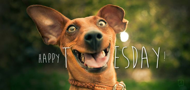Happy Tuesday Funny Days Of The Week Pinterest Funny Happy