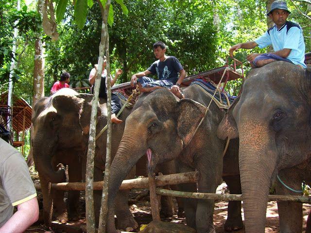 Rezerwat Słoni Na Wyspie Koh Chang W Tajlandii Lasy