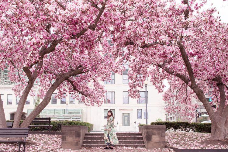 10 Secret Gardens In Washington Dc That Are Totally Instagrammable Secret Garden Perfect Garden Amazing Gardens