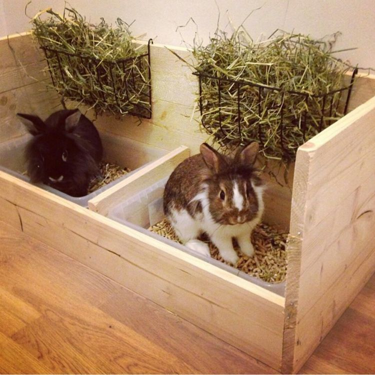 how to potty train a rabbit to use a litter box
