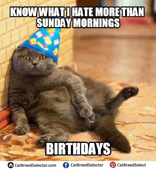 Grumpy Cat Happy Birthday Meme | Cat birthday memes, Happy ...