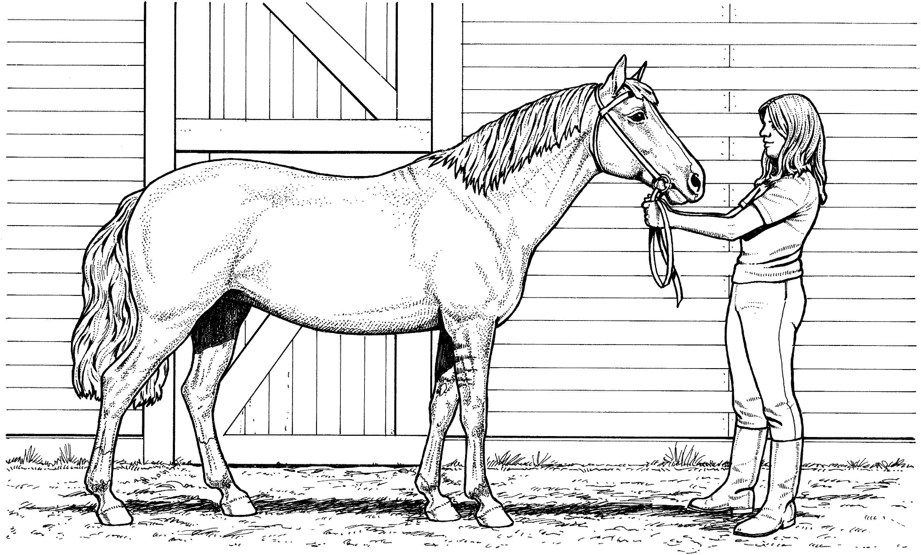 Woman And Mare Horse Coloring Page Horse Coloring Pages Horse Coloring Animal Coloring Pages [ 1797 x 2984 Pixel ]