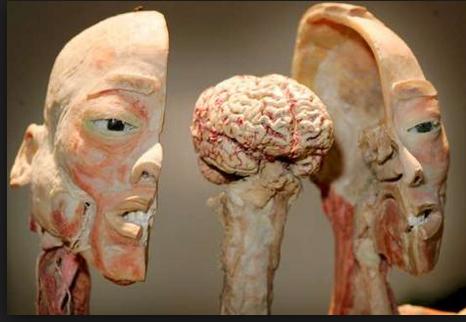 Human Naga Bodies Exhibit Body Human Body