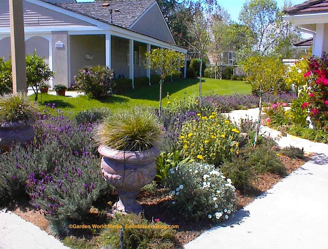 front yard drought landscape design