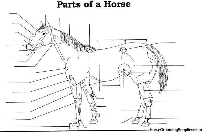 Image result for parts of the horse worksheet | Horses ...