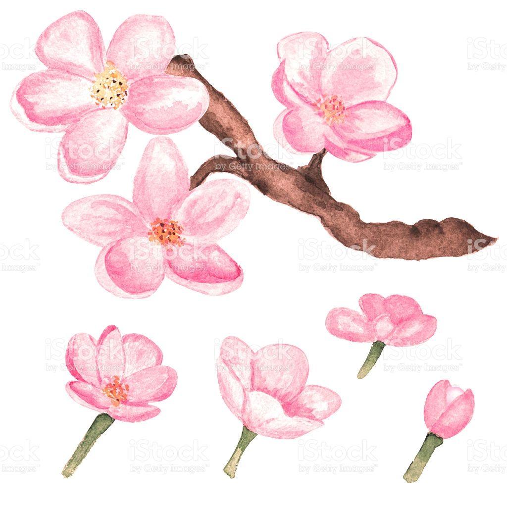 Watercolor Rama Del Arbol De Cerezo En Flor De Sakura Y De Flores Ilustracion Flor De Cerezo Dibujo Arte De Flor De Cerezo Arbol De Cerezo Dibujo