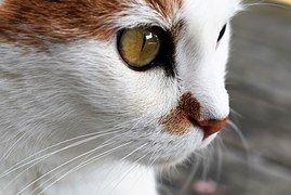 Cat, Des Animaux, Fermer, Animaux