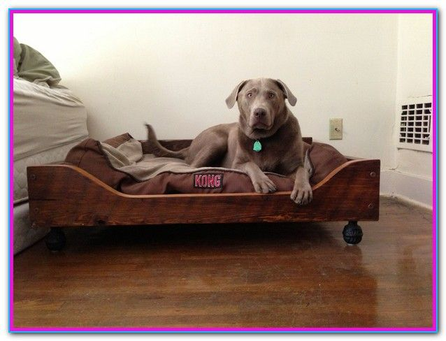 Best Washable Dog Beds For Large Dogs Dogs Pinterest Dog Bed