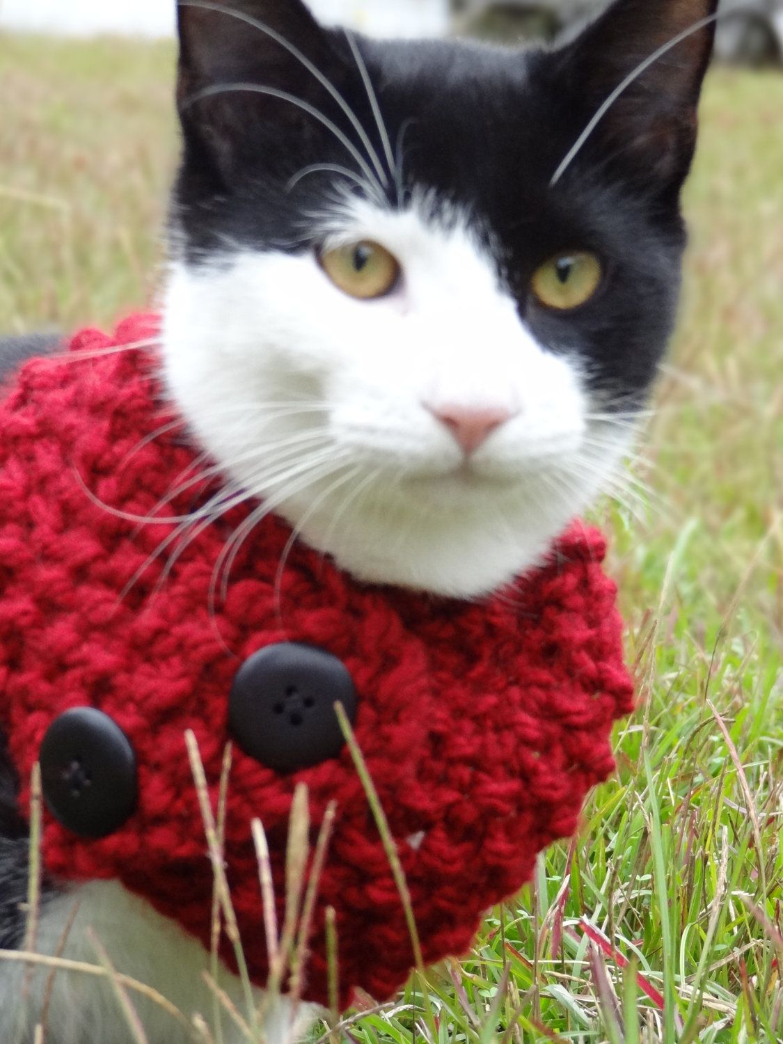 Cat Dog Cowl Scarf Custom Colors Size Large By Iheartneedlework 35 00 Small Dogs Cat Accessories