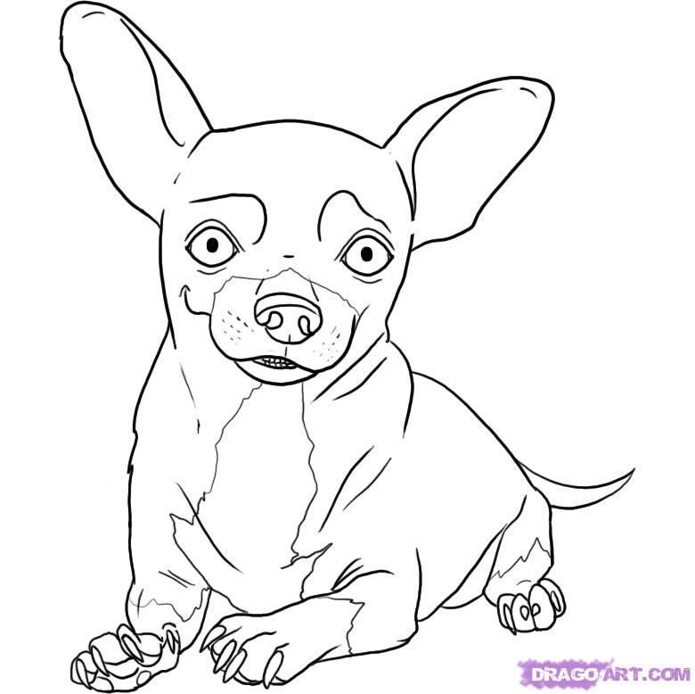 Pics Photos Chihuahua Coloring Pages Chihuahua Coloring Pages Jpg ...