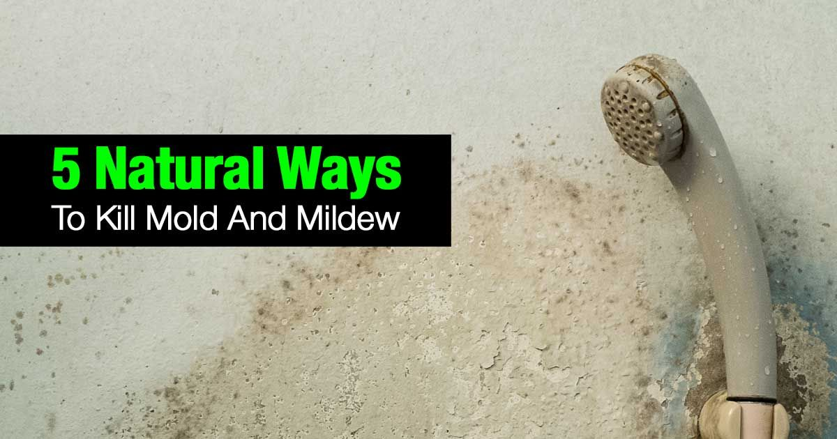 5 Natural Ways To Kill Mold And Mildew Allergy symptoms