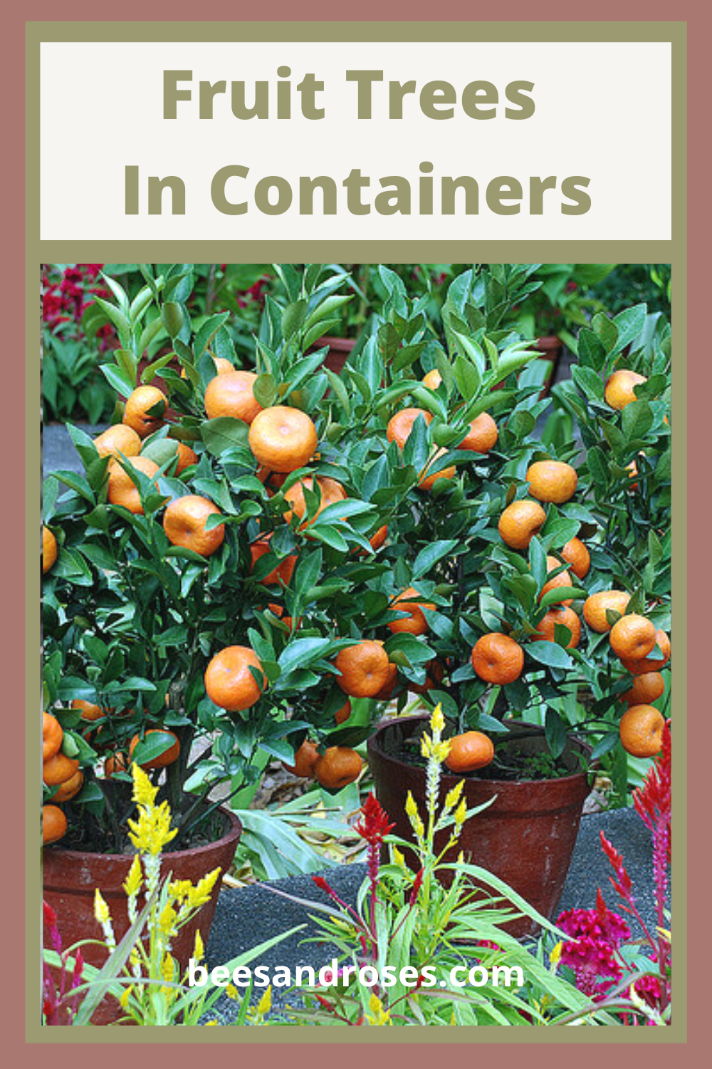 Fruit Trees In Containers Are Easy To Grow Growing Fruit Trees Growing Fruit Fruit Trees In Containers