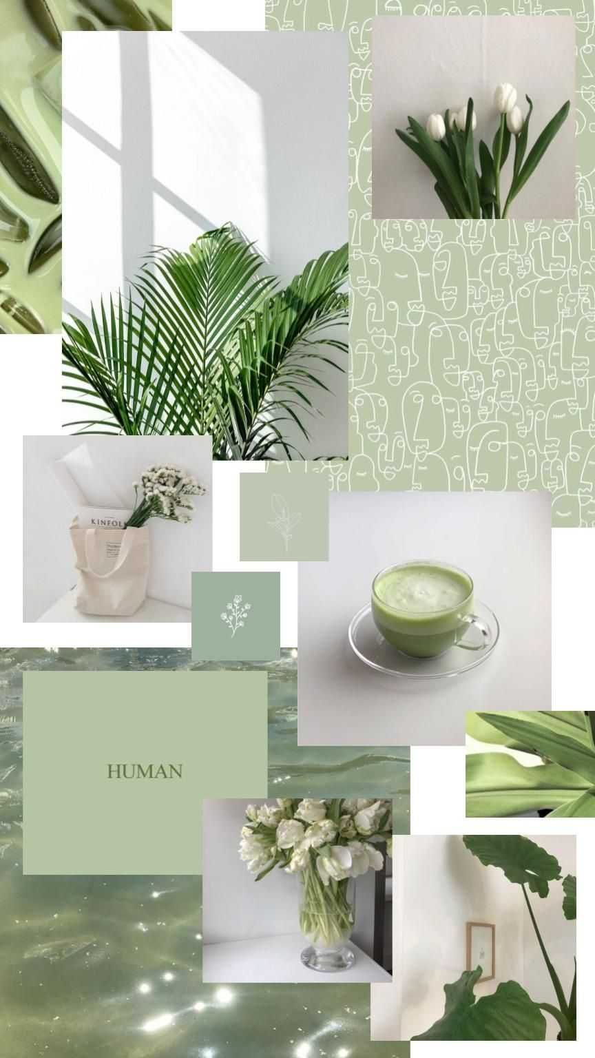 Sage Green Aesthetic Wallpaper - NawPic