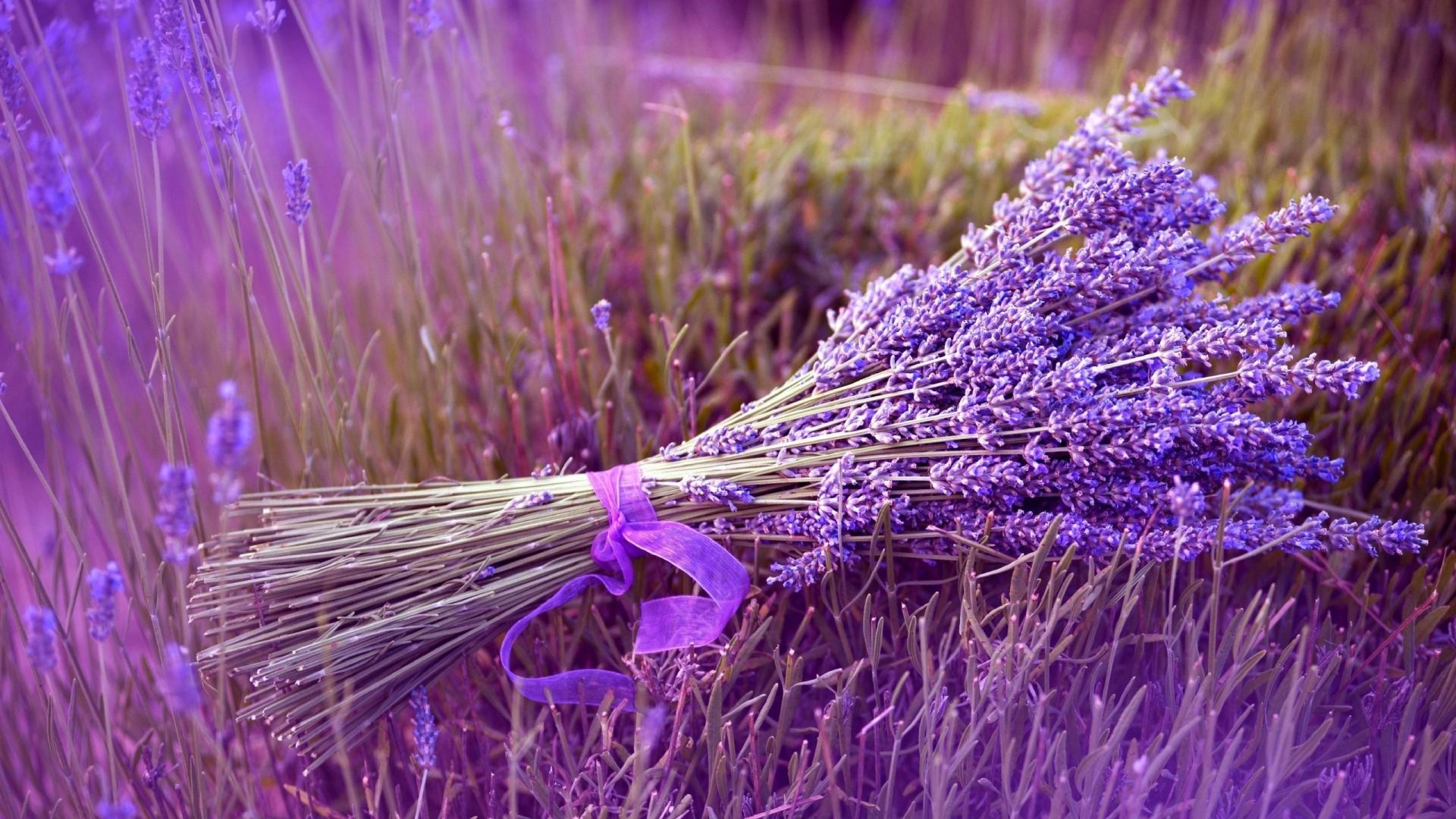 Pin By Linda Franceschi On Visual Inspiration To Create Soaps Lavender Plant Care Growing Lavender Lavender Plant