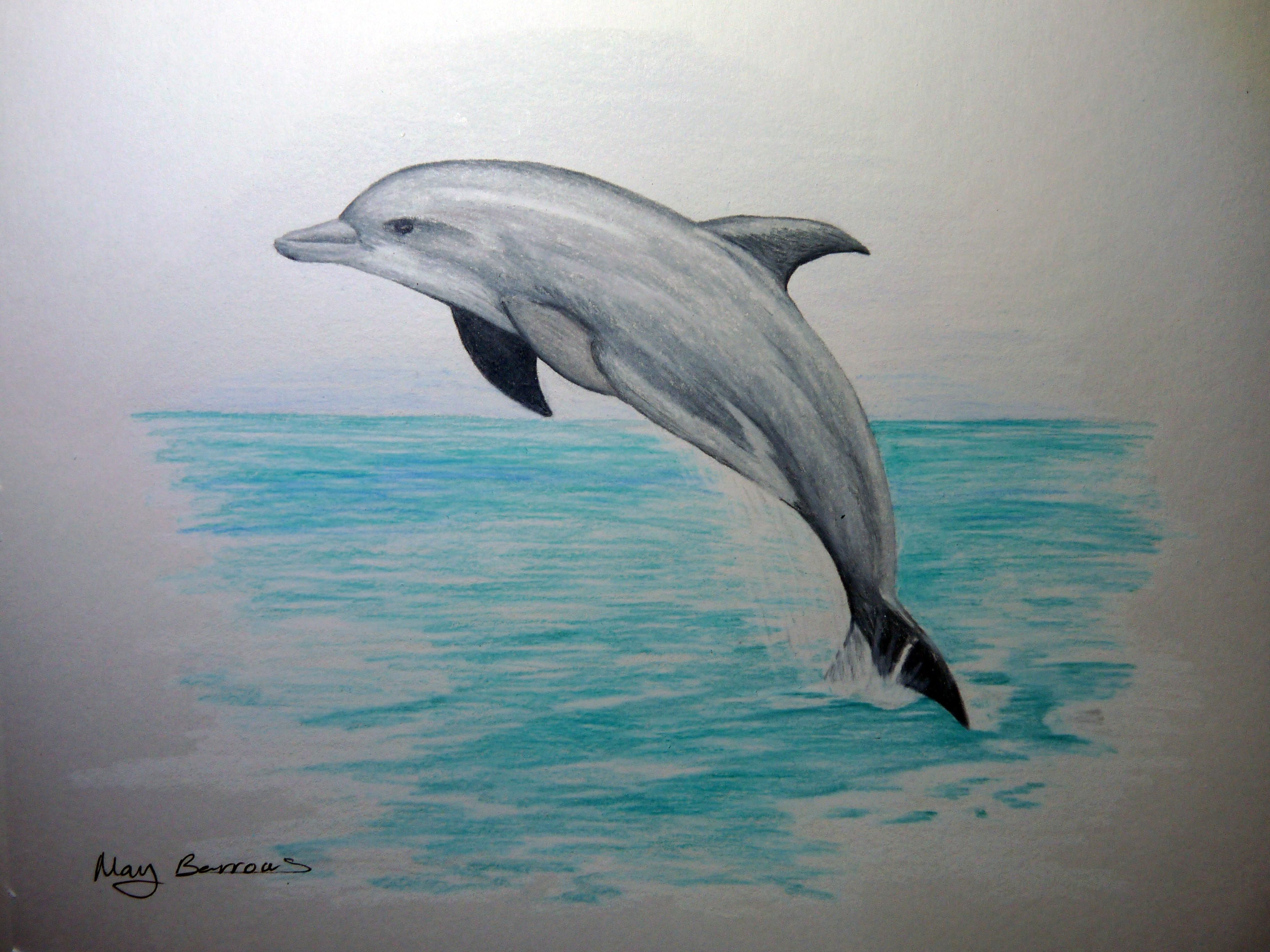 Pencil Drawings Of Dolphins 1000+ images about aquatic ideas on ...