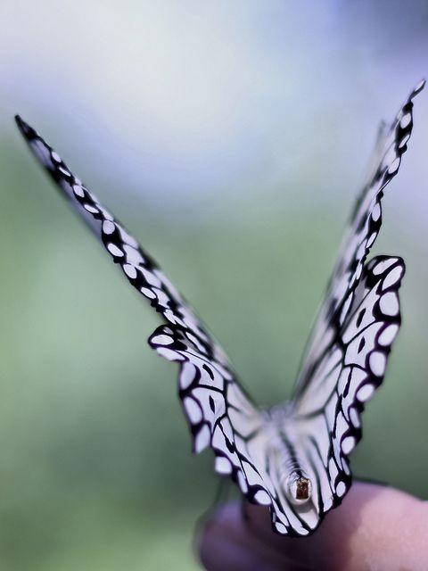 ~Great shot!~ #butterflies