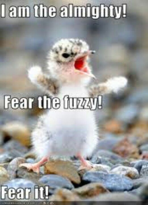 Fear the fuzzy
