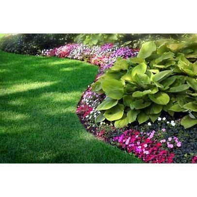 shade-tolerant annuals like impatiens (Impatiens walleriana cvs ...