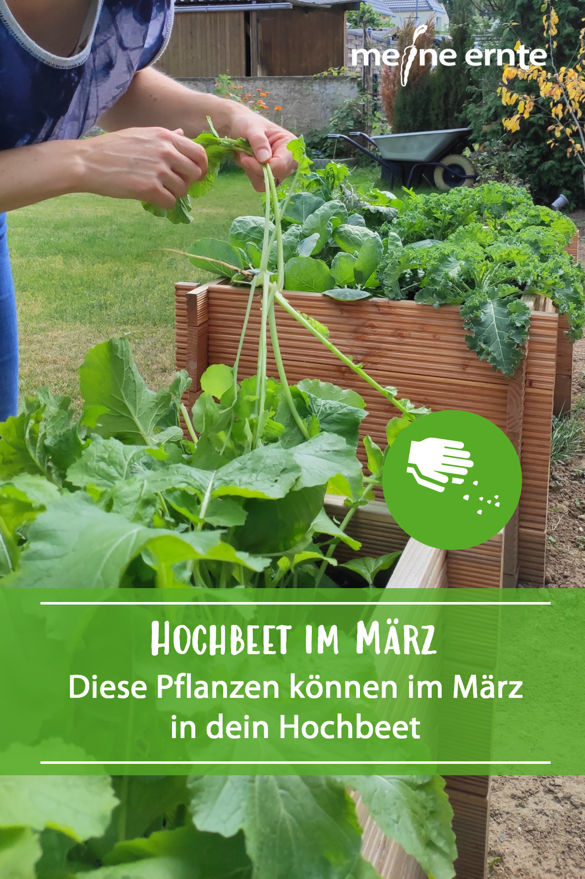 Im Marz Kannst Du In Dein Hochbeet Schon Einige Gemusepflanzen Ausbringen Ein Fruhbeet Schutzt Zusatzlich Vor Nasse Und In 2020 Hochbeet Pflanzen Gartenarbeit Im Marz