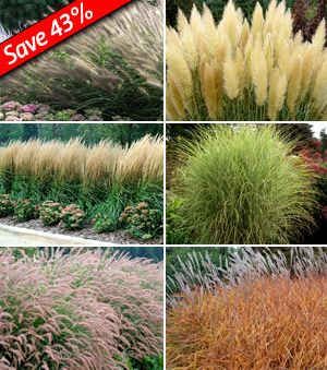 Ornamental Grass Garden Plan Grasses as hedge plants karl foerster feather reed grass interesting mix of ornamental grasses for the front yard landscape planis is great for a very sunny spot or for someone whos not really into flowers but workwithnaturefo