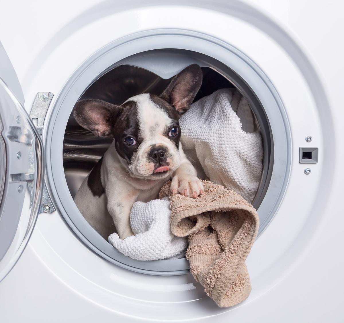 Stoke on trent new washing machines Bulldog, French