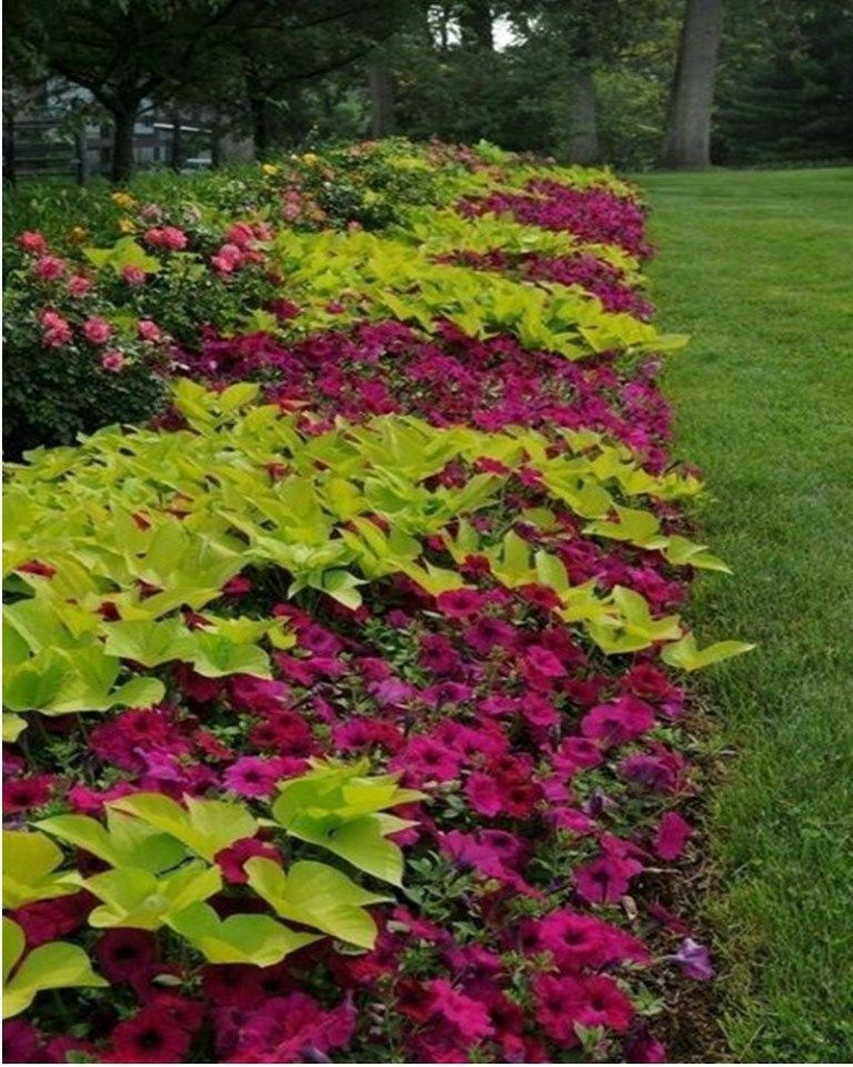 Striking Petunia Centerpiece Ideas For Garden Design And Yard