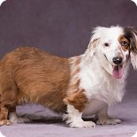 Adopt A Pet Millie League City Tx Dog Adoption Dog Search Dogs
