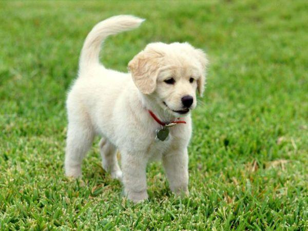 Küçük Köpek Türleri Ile Ilgili Görsel Sonucu Köpek Türleri Dogs