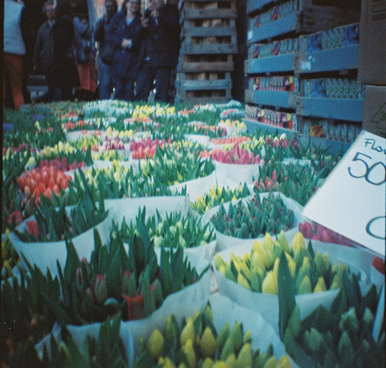 Amsterdam flower market with my diana mini
