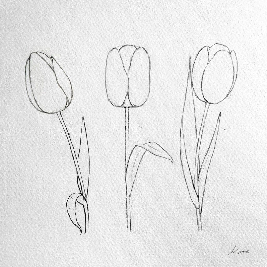 How To Draw Flowers Tulip Drawing Flower Drawing Flower Sketches