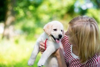De eerste dagen met je nieuwe pup. Hoera, je puppy is