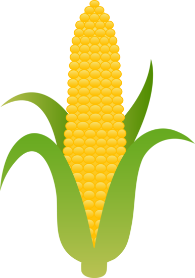 Large Husk Of Golden Corn Harvest Corn Clip Art Fruit Clipart