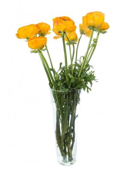 Ranunkeln XXL gelb | Ranunkeln, Gelbe blumen und Frühlingsblumen