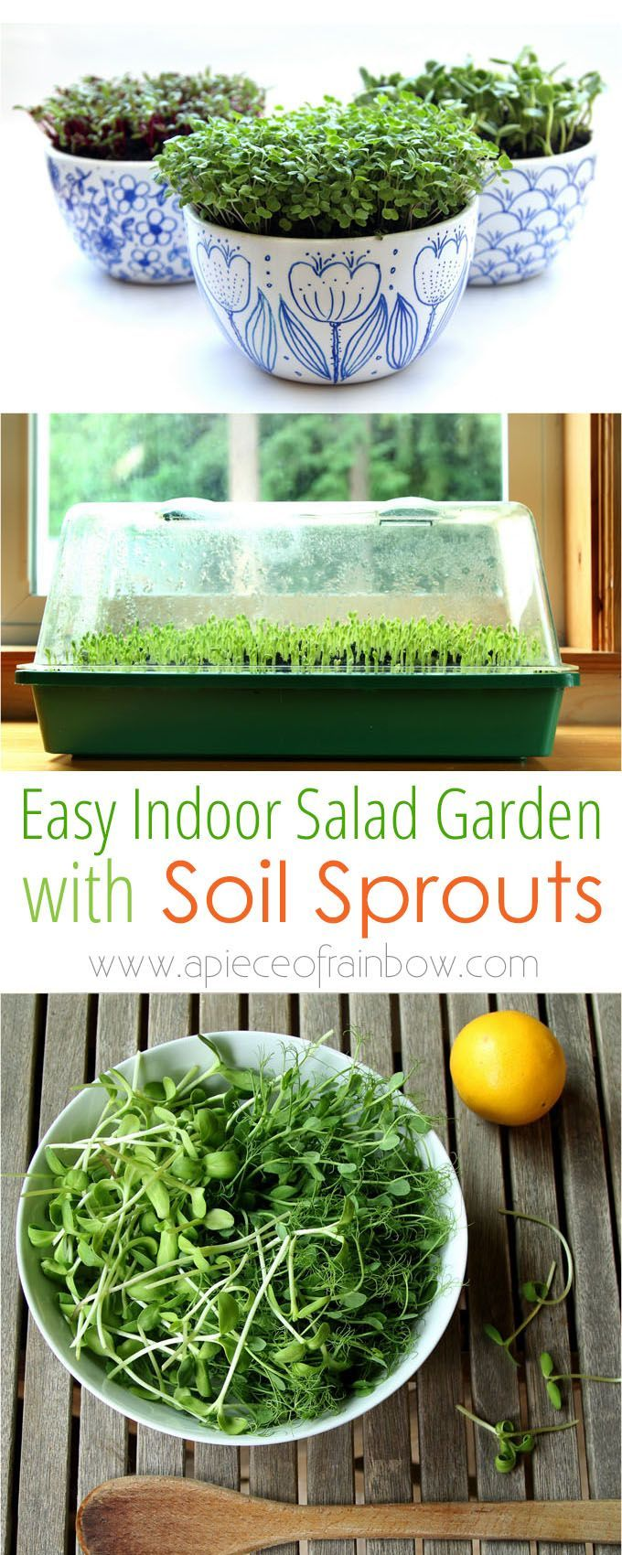 Grow an indoor salad garden with soil sprouts page 2 of 2 garden how to grow soil sprouts an easy method to grow nutritious sprouts and baby greens workwithnaturefo
