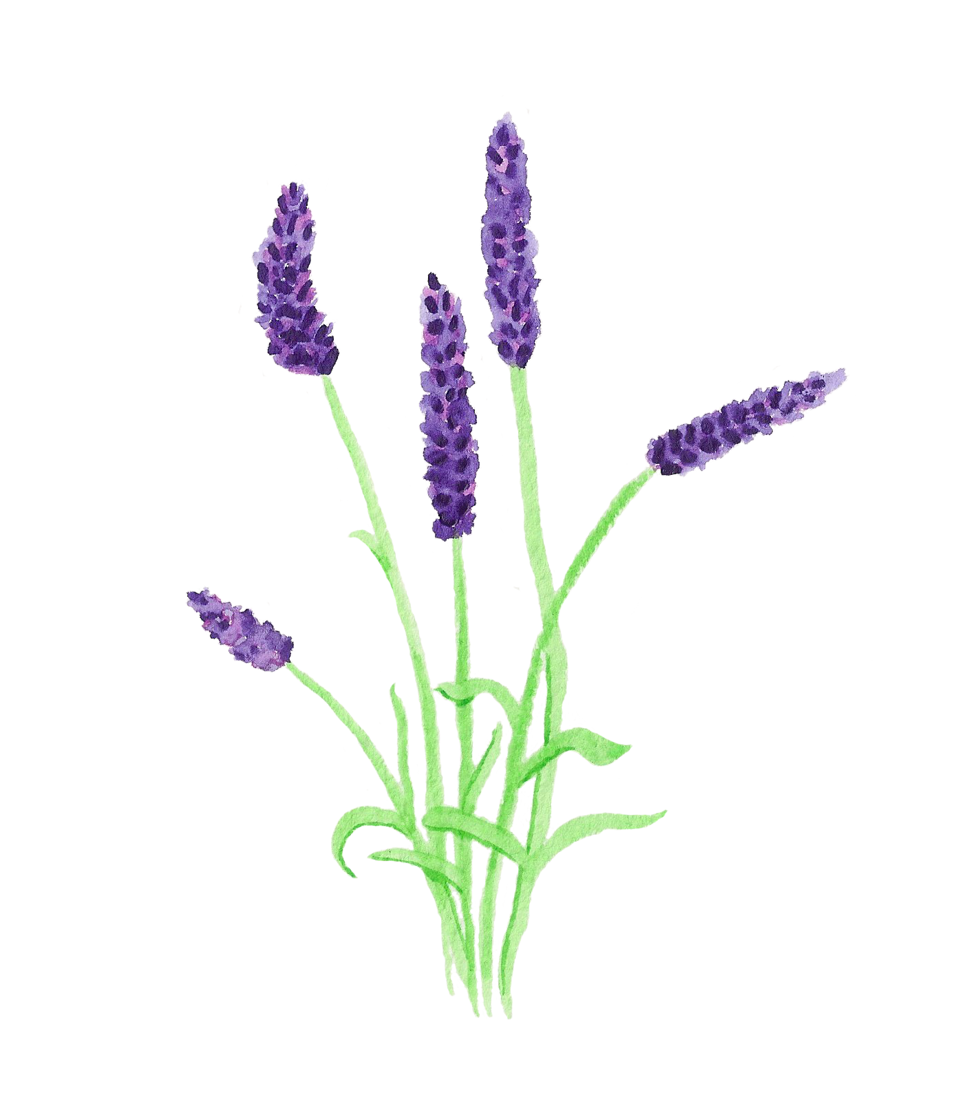 print pinterest flower art rh pinterest com Lavender Illustration Lavender Illustration