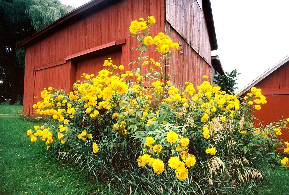 Barn flowers kodak ektar 100 film flowers resume
