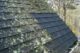 Woodinville Roof Moss Removal