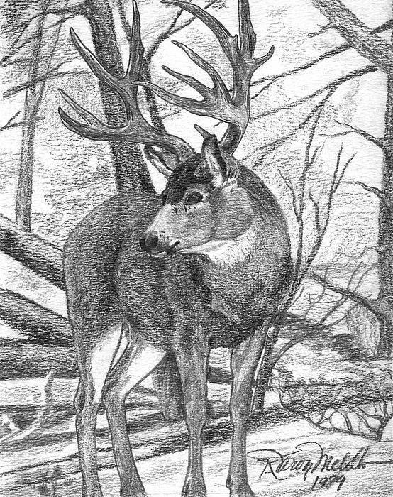 тебя картинки для рисования с оленями сделан