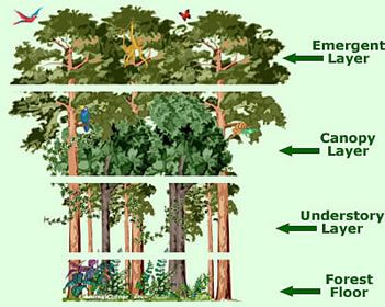 forest canopy diagram kc hilites wiring paw prints the toucan ninjas go to school pinterest