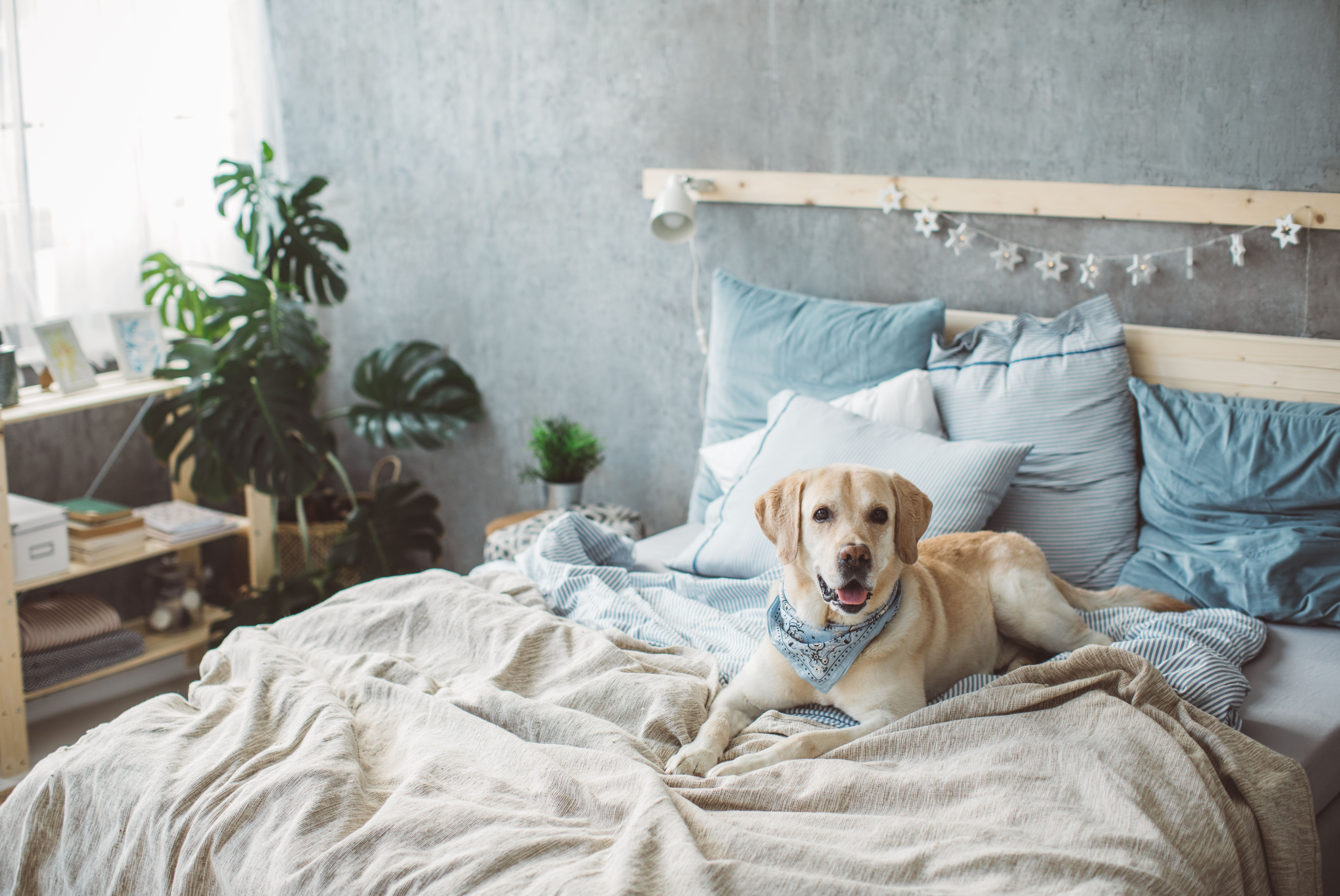 How to Stop a Dog From Peeing & Pooping on the Bed Dog