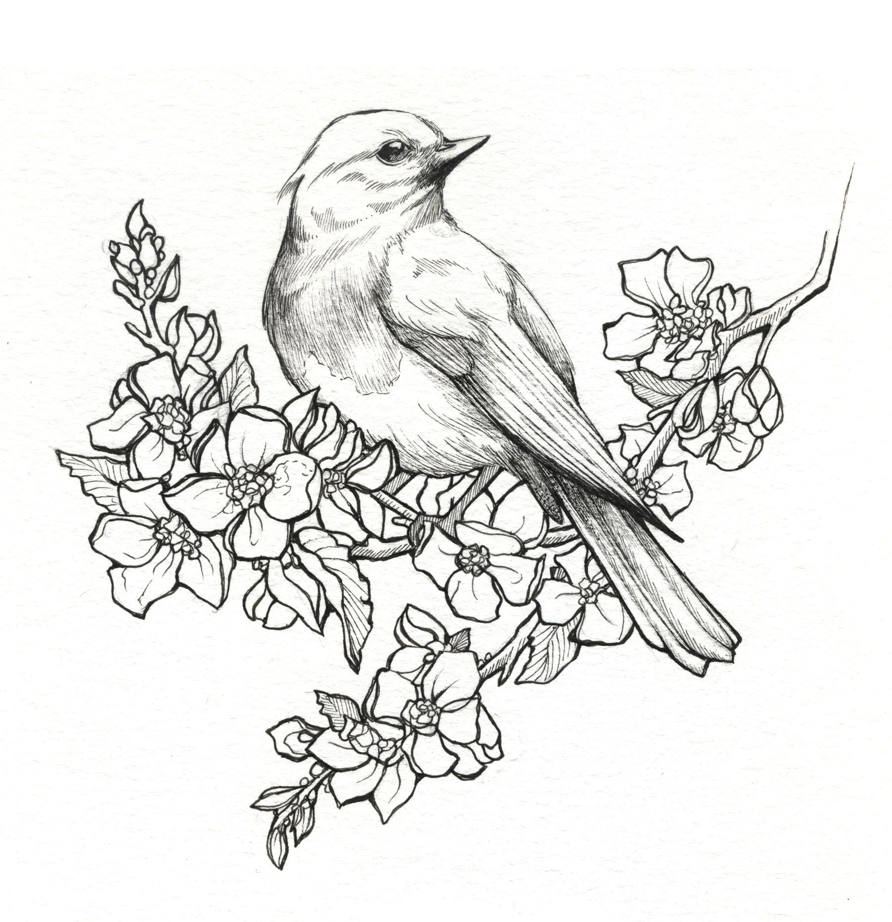 Painting Girls Apple Blossoms Picking Flowers Google Search Pencil Drawings Of Flowers Bird Drawings Bird Sketch