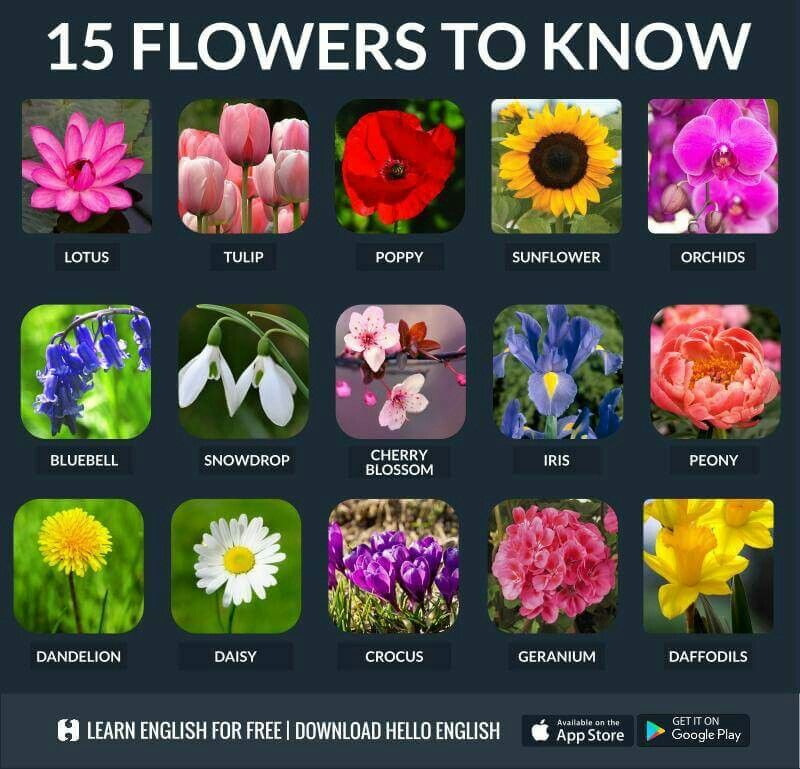 Flower Name English Vocabulary Learn English English Vocabulary Words