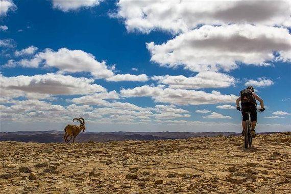 Desert MTB Ride Israel Fine Art Print Outdoor by septAAOUTDOOR