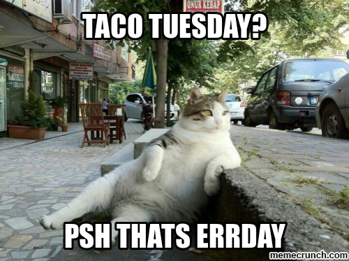 Funny Meme For Tuesday : Taco tuesday something to laugh at taco tuesday