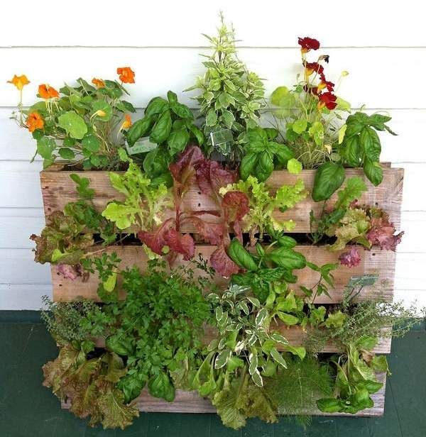 Vertical Vegetable Garden | Vertical Garden