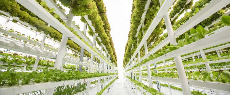 The world's largest vertical farm will feature at Dubai's